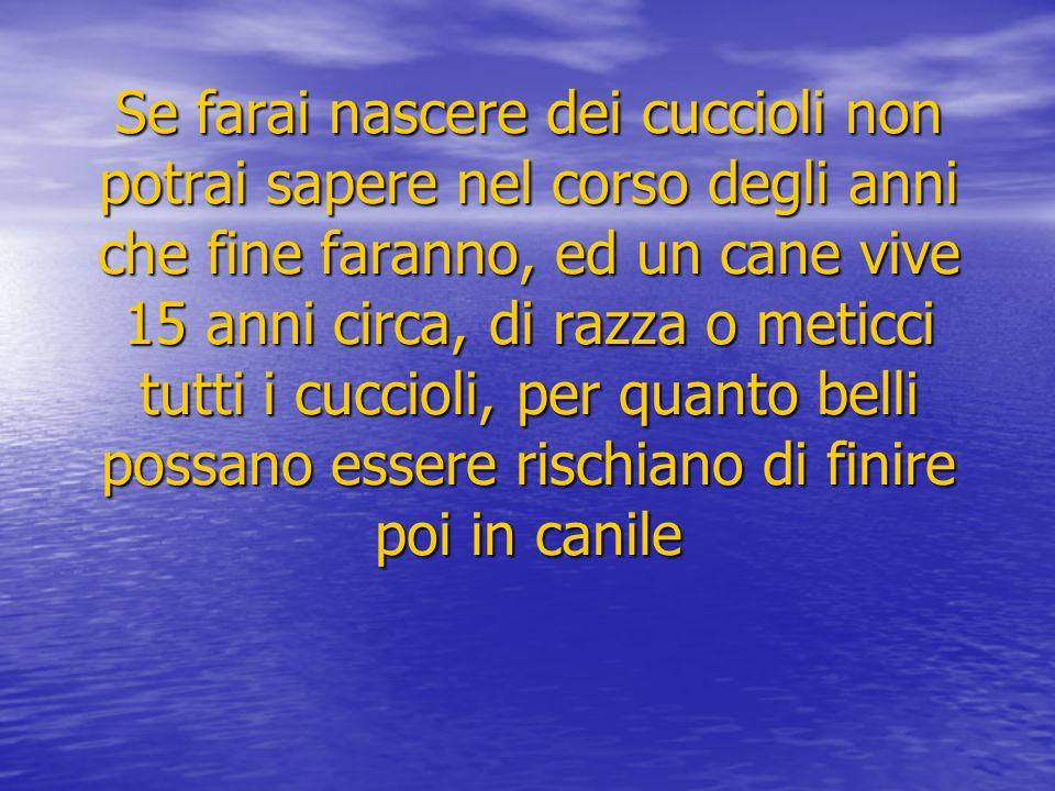 Solo nella provincia di Milano ci sono circa 20 canili, ogni canile contiente in media 400/500 cani.