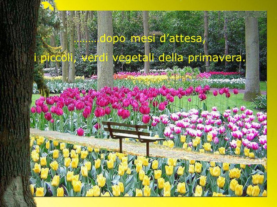 ………dopo mesi dattesa, i piccoli, verdi vegetali della primavera.