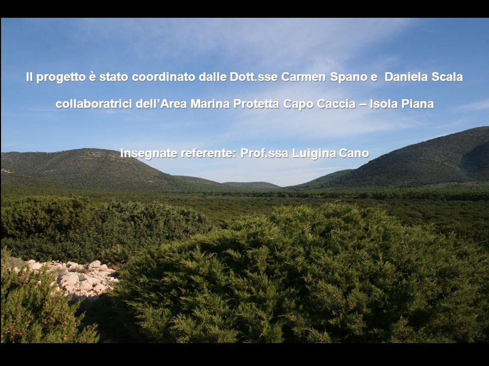 Il progetto è stato coordinato dalle Dott.sse Carmen Spano e Daniela Scala collaboratrici dellArea Marina Protetta Capo Caccia – Isola Piana Insegnate referente: Prof.ssa Luigina Cano
