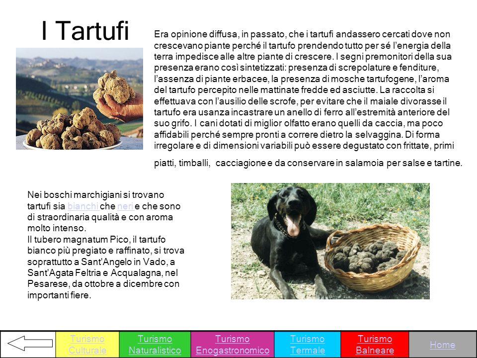 I Tartufi Nei boschi marchigiani si trovano tartufi sia bianchi che neri e che sono di straordinaria qualità e con aroma molto intenso. Il tubero magn