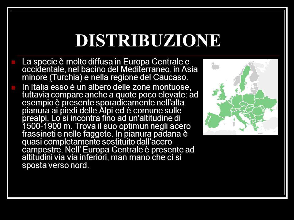 DISTRIBUZIONE La specie è molto diffusa in Europa Centrale e occidentale, nel bacino del Mediterraneo, in Asia minore (Turchia) e nella regione del Ca