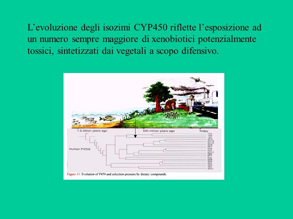 Levoluzione degli isozimi CYP450 riflette lesposizione ad un numero sempre maggiore di xenobiotici potenzialmente tossici, sintetizzati dai vegetali a