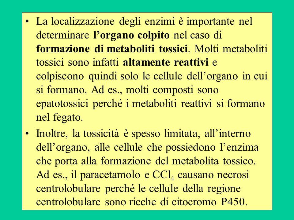 La localizzazione degli enzimi è importante nel determinare lorgano colpito nel caso di formazione di metaboliti tossici. Molti metaboliti tossici son