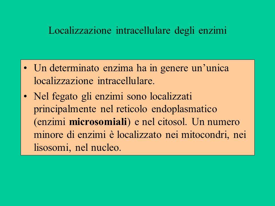 Localizzazione intracellulare degli enzimi Un determinato enzima ha in genere ununica localizzazione intracellulare. Nel fegato gli enzimi sono locali