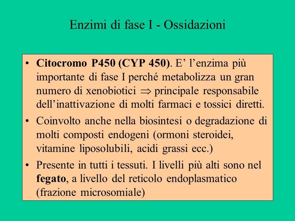 Enzimi di fase I - Ossidazioni Citocromo P450 (CYP 450). E lenzima più importante di fase I perché metabolizza un gran numero di xenobiotici principal
