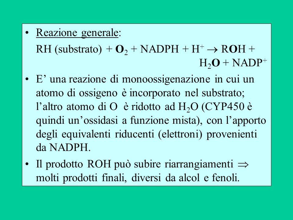 Reazione generale: RH (substrato) + O 2 + NADPH + H + ROH + H 2 O + NADP + E una reazione di monoossigenazione in cui un atomo di ossigeno è incorpora