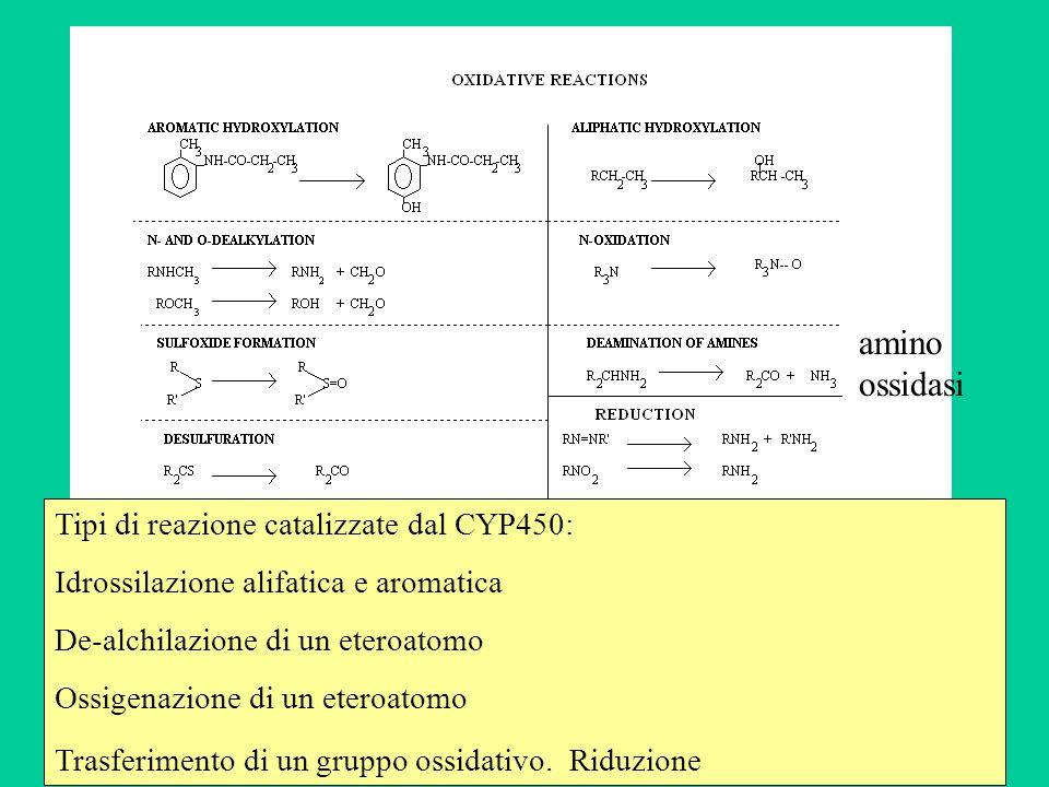 Tipi di reazione catalizzate dal CYP450: Idrossilazione alifatica e aromatica De-alchilazione di un eteroatomo Ossigenazione di un eteroatomo Trasferi