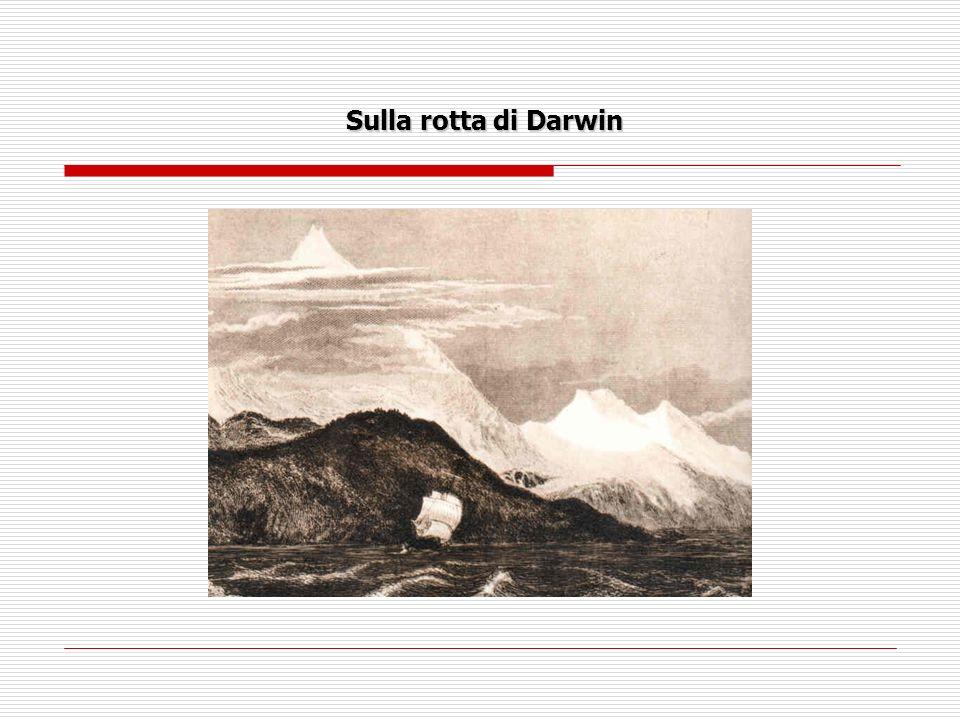 Lisola Espanola Chiunque, a più di 170 anni dal viaggio del Beagle, si trovi su queste isole potrà confermare la fiducia commovente degli uccelli nei confronti degli uomini che oggi, fortunatamente, li rispettano maggiormente.