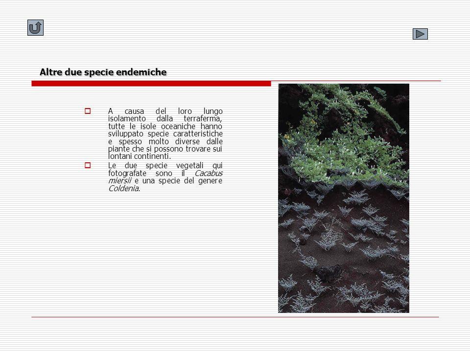 Altre due specie endemiche A causa del loro lungo isolamento dalla terraferma, tutte le isole oceaniche hanno sviluppato specie caratteristiche e spes