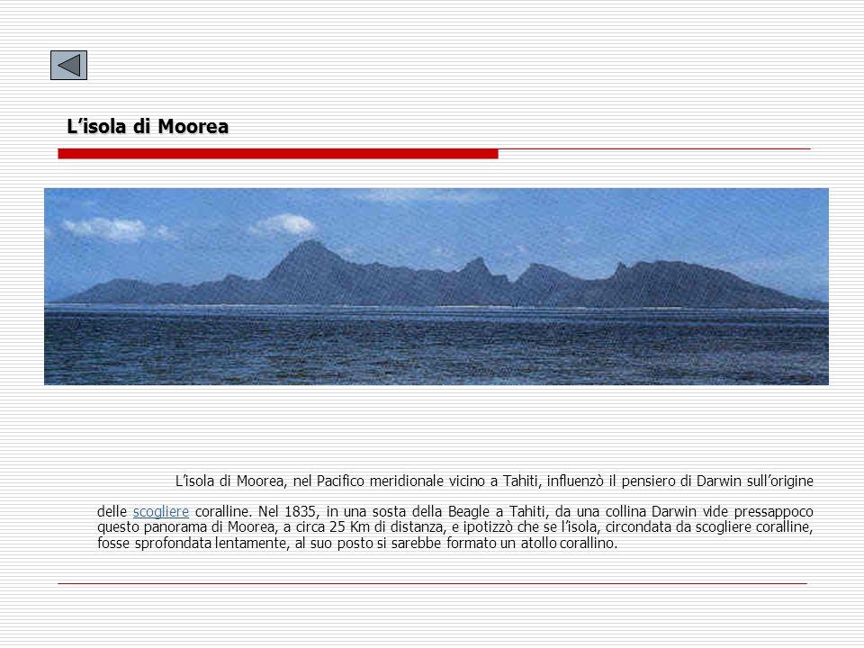 Lisola di Moorea Lisola di Moorea, nel Pacifico meridionale vicino a Tahiti, influenzò il pensiero di Darwin sullorigine delle scogliere coralline. Ne