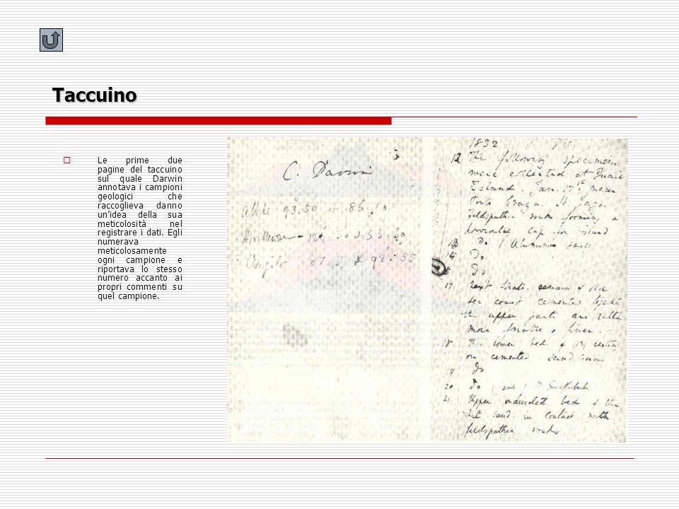 Taccuino Le prime due pagine del taccuino sul quale Darwin annotava i campioni geologici che raccoglieva danno unidea della sua meticolosità nel regis