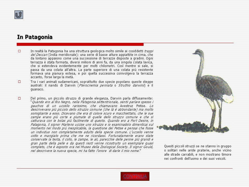 In Patagonia In realtà la Patagonia ha una struttura geologica molto simile ai cosiddetti trappi del Deccan (India meridionale): una serie di basse al
