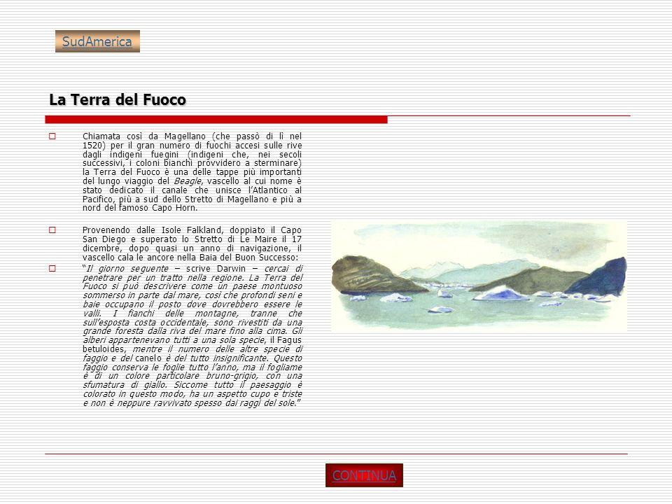 La Terra del Fuoco Chiamata così da Magellano (che passò di lì nel 1520) per il gran numero di fuochi accesi sulle rive dagli indigeni fuegini (indige