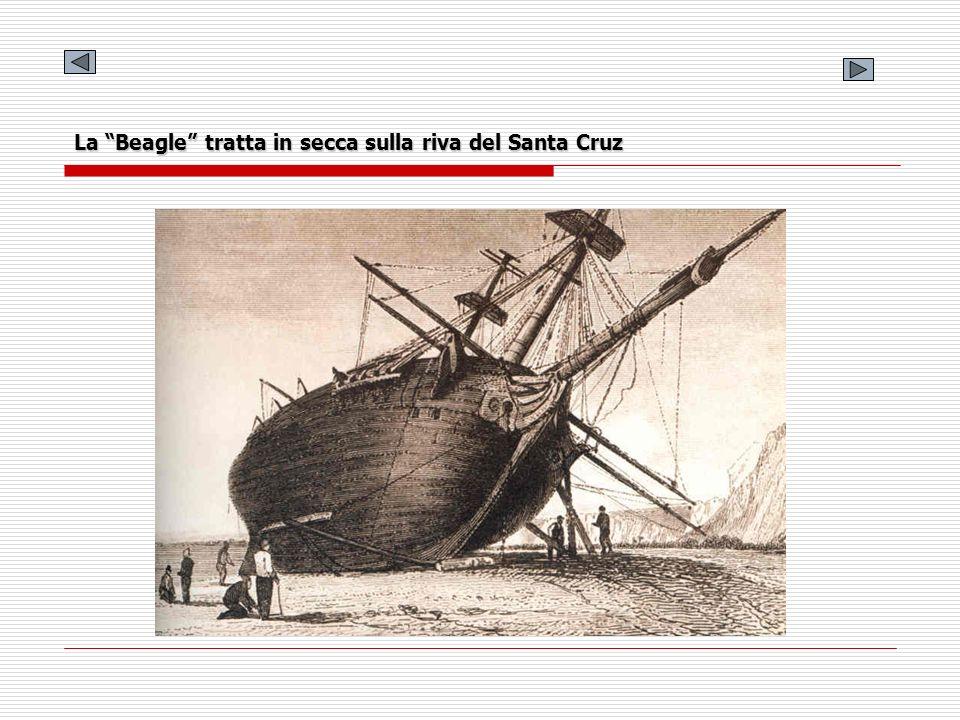 Sezione trasversale della Beagle Questo disegno è stato eseguito da Philip Gidley King parecchi anni dopo il viaggio.