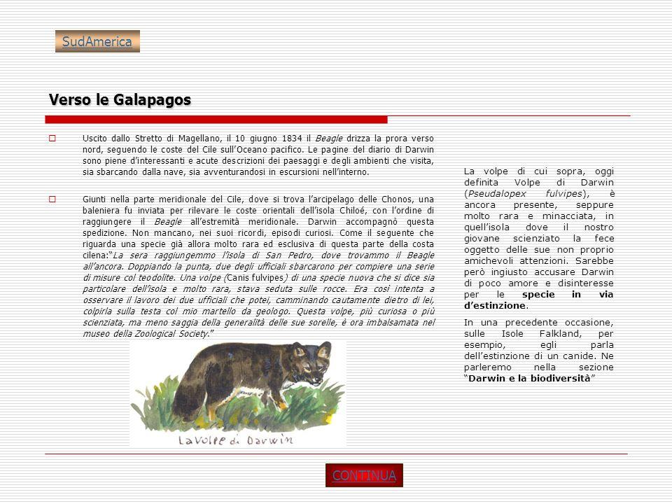 Verso le Galapagos Uscito dallo Stretto di Magellano, il 10 giugno 1834 il Beagle drizza la prora verso nord, seguendo le coste del Cile sullOceano pa