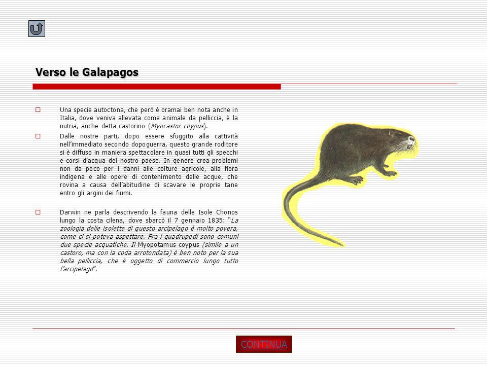 Verso le Galapagos Una specie autoctona, che però è oramai ben nota anche in Italia, dove veniva allevata come animale da pelliccia, è la nutria, anch