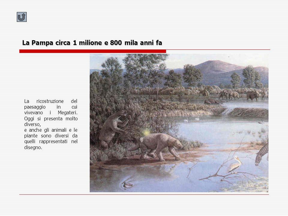 La Pampa circa 1 milione e 800 mila anni fa La ricostruzione del paesaggio in cui vivevano i Megateri. Oggi si presenta molto diverso, e anche gli ani