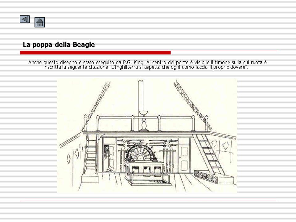 La poppa della Beagle Anche questo disegno è stato eseguito da P.G. King. Al centro del ponte è visibile il timone sulla cui ruota è inscritta la segu