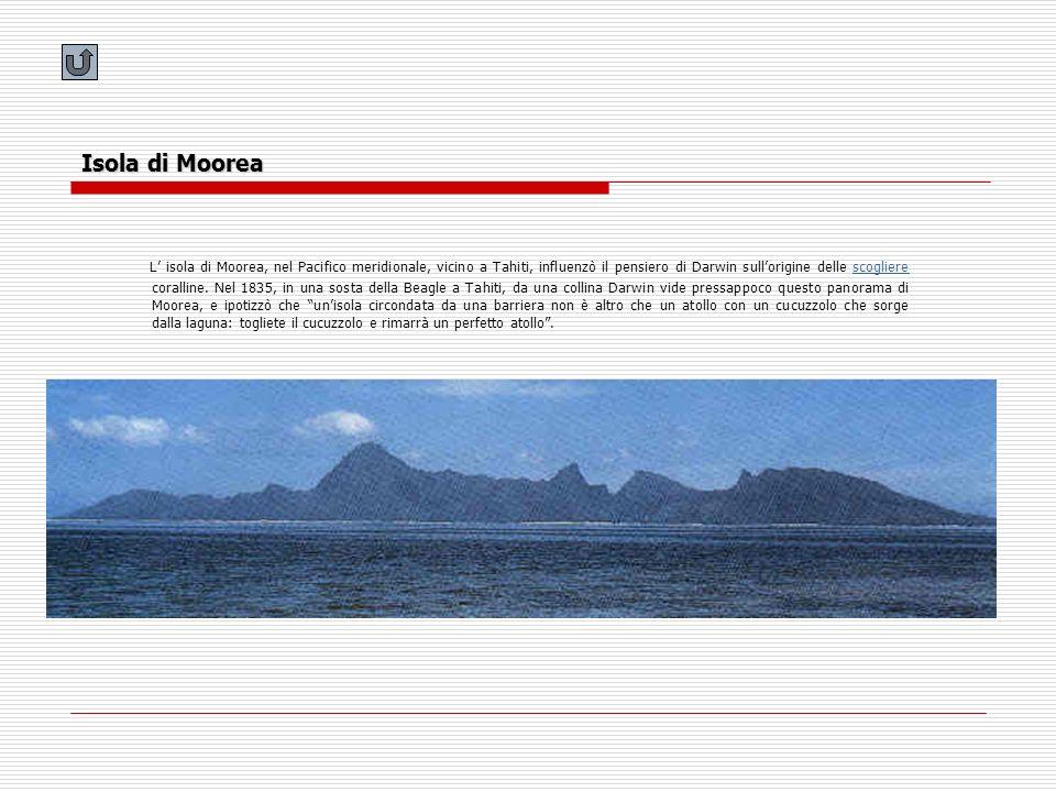 Isola di Moorea L isola di Moorea, nel Pacifico meridionale, vicino a Tahiti, influenzò il pensiero di Darwin sullorigine delle scogliere coralline. N