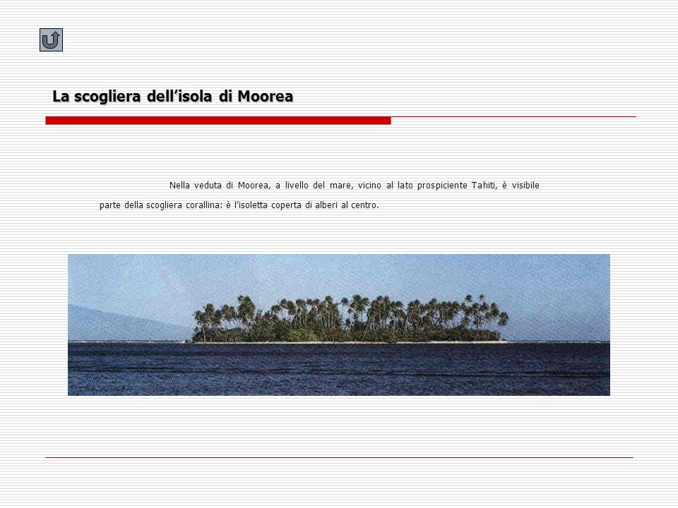 La scogliera dellisola di Moorea Nella veduta di Moorea, a livello del mare, vicino al lato prospiciente Tahiti, è visibile parte della scogliera cora
