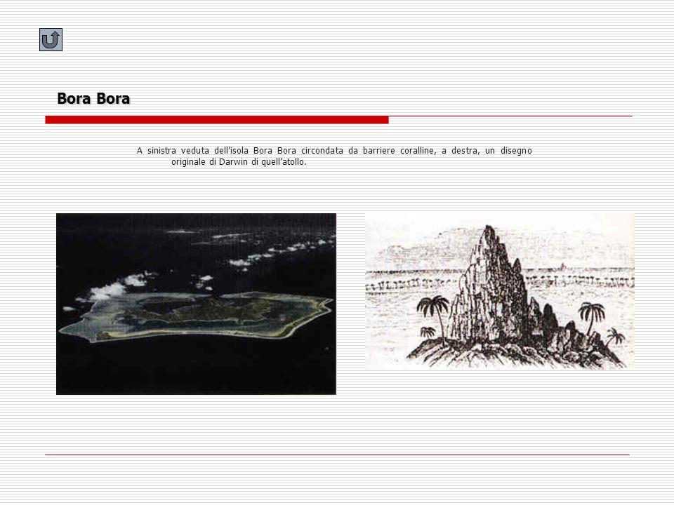 Bora Bora A sinistra veduta dellisola Bora Bora circondata da barriere coralline, a destra, un disegno originale di Darwin di quellatollo.