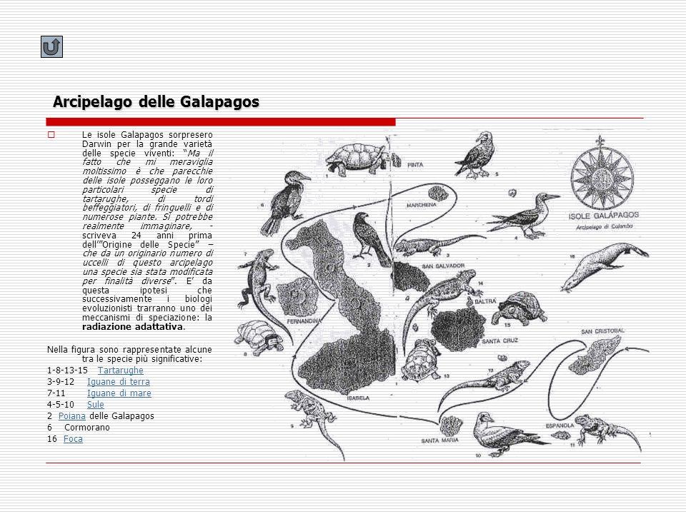 Arcipelago delle Galapagos Le isole Galapagos sorpresero Darwin per la grande varietà delle specie viventi: Ma il fatto che mi meraviglia moltissimo è