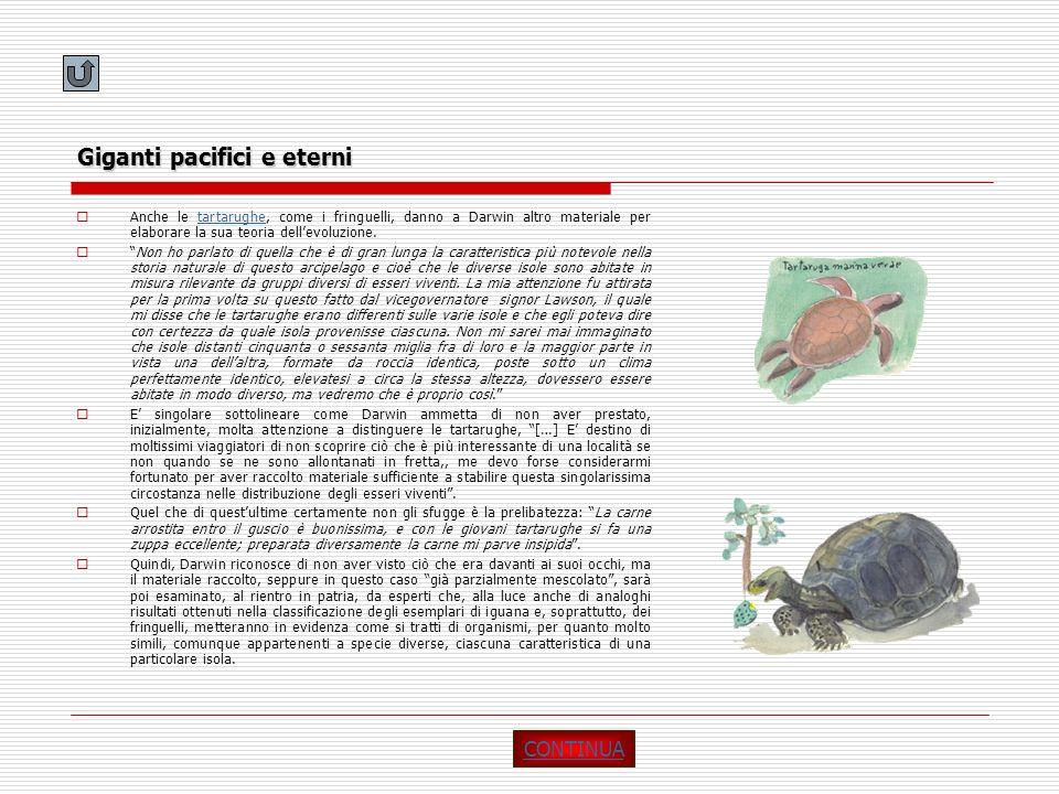 Giganti pacifici e eterni Anche le tartarughe, come i fringuelli, danno a Darwin altro materiale per elaborare la sua teoria dellevoluzione.tartarughe