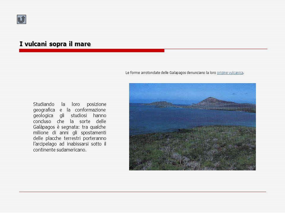 I vulcani sopra il mare Le forme arrotondate delle Galapagos denunciano la loro origine vulcanica.origine vulcanica Studiando la loro posizione geogra