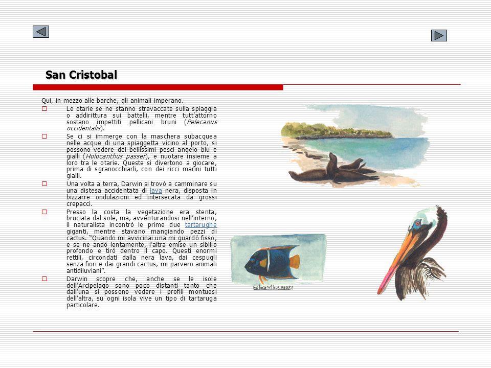 San Cristobal Qui, in mezzo alle barche, gli animali imperano. Le otarie se ne stanno stravaccate sulla spiaggia o addirittura sui battelli, mentre tu