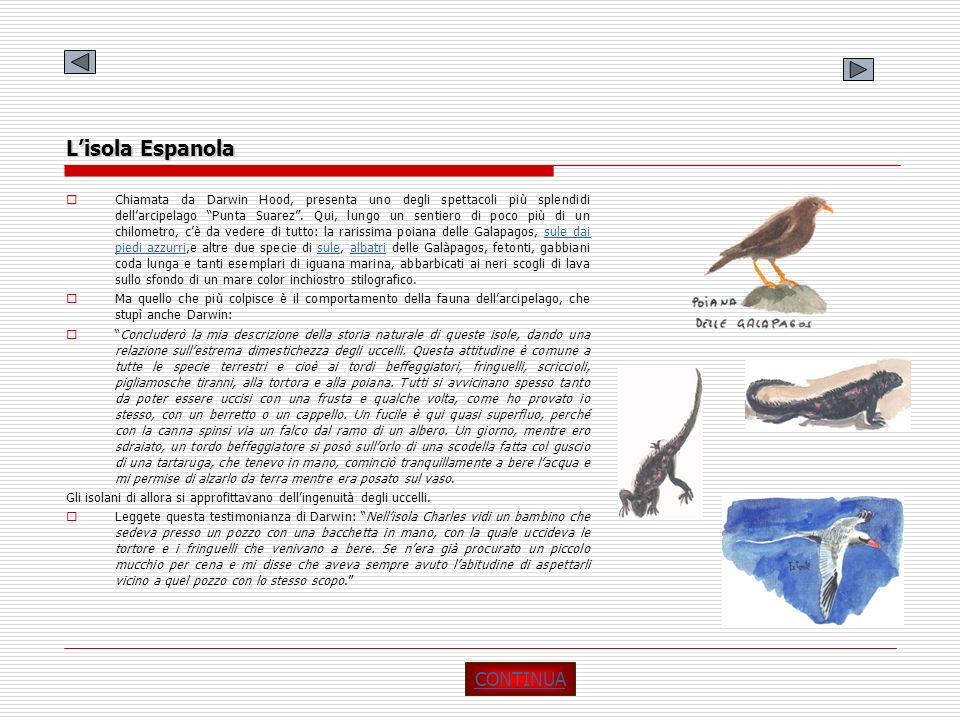 Lisola Espanola Chiamata da Darwin Hood, presenta uno degli spettacoli più splendidi dellarcipelago Punta Suarez. Qui, lungo un sentiero di poco più d