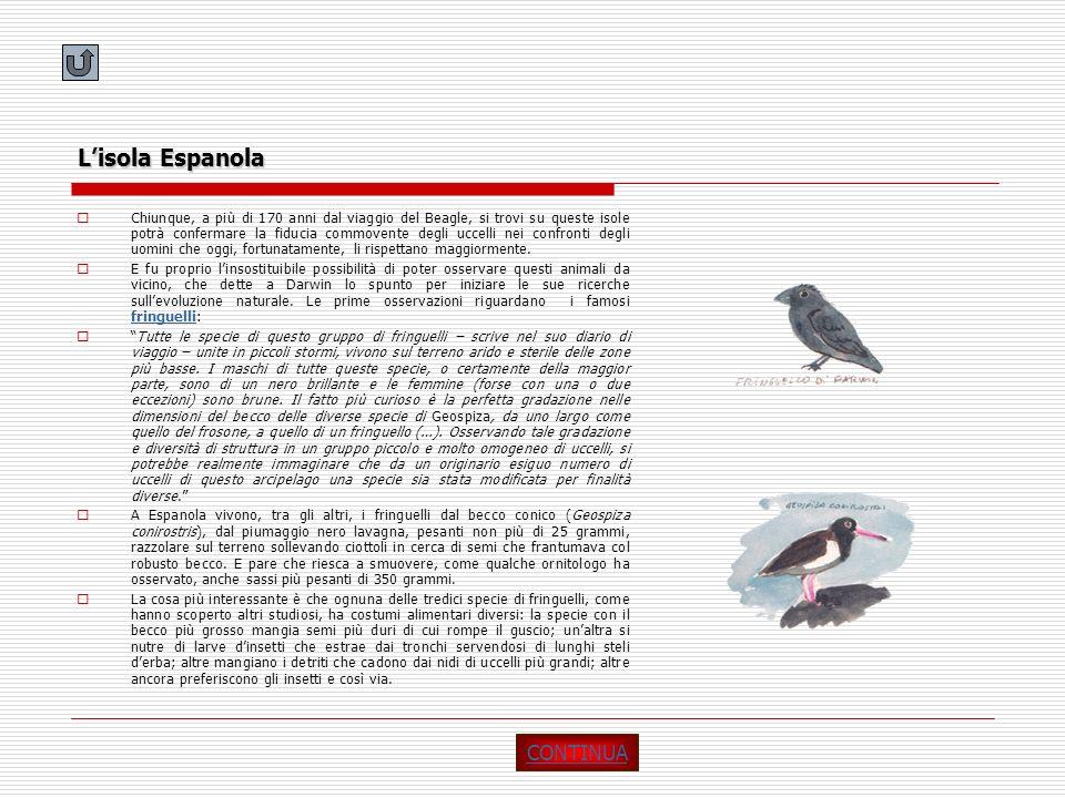 Lisola Espanola Chiunque, a più di 170 anni dal viaggio del Beagle, si trovi su queste isole potrà confermare la fiducia commovente degli uccelli nei
