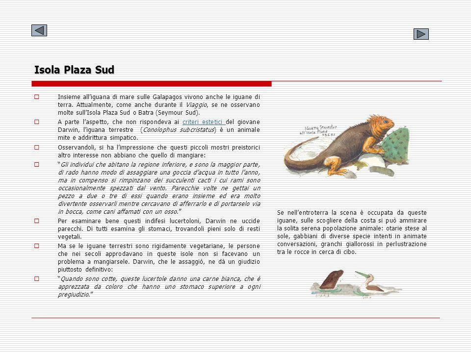 Isola Plaza Sud Insieme alliguana di mare sulle Galapagos vivono anche le iguane di terra. Attualmente, come anche durante il Viaggio, se ne osservano