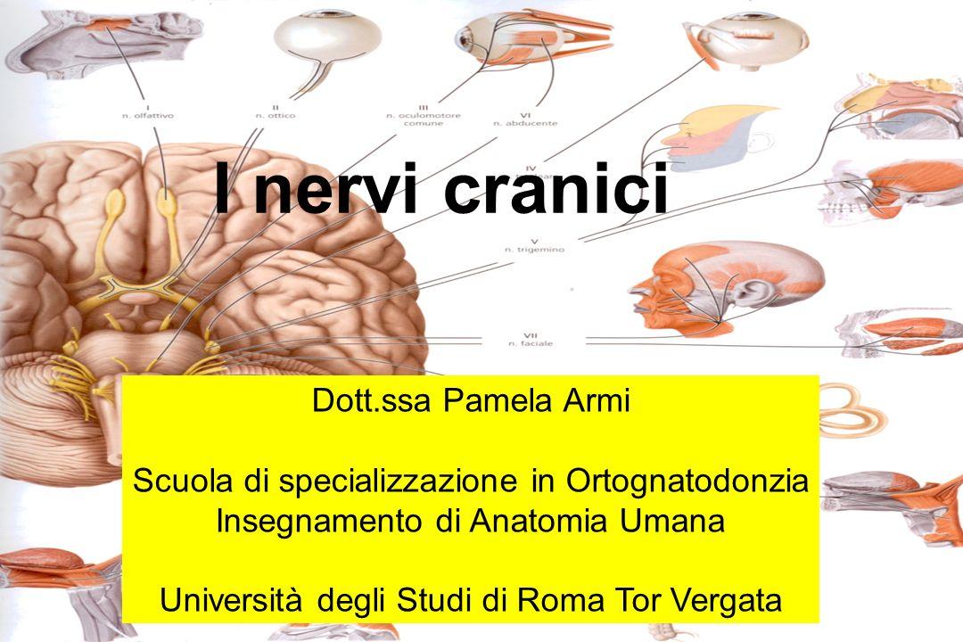 I nervi cranici Dott.ssa Pamela Armi Scuola di specializzazione in Ortognatodonzia Insegnamento di Anatomia Umana Università degli Studi di Roma Tor Vergata
