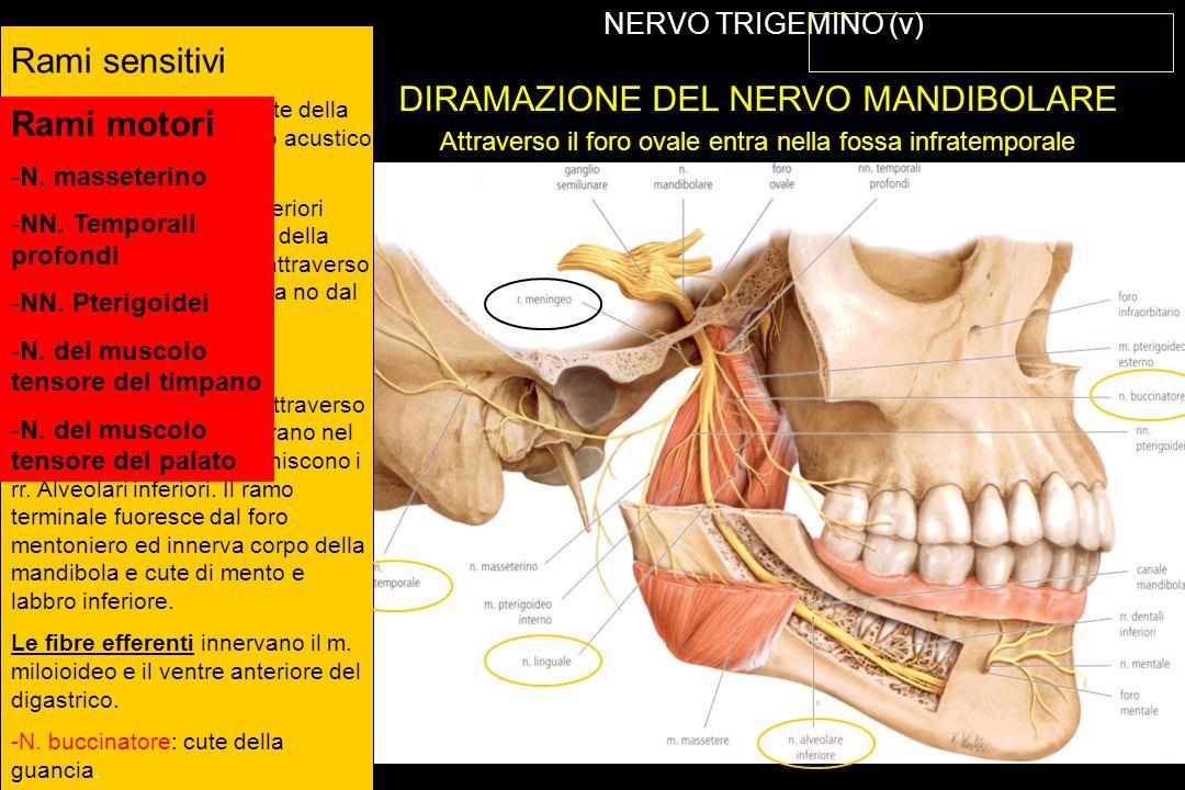 NERVO VAGO (X) TERRITORI DI INNERVAZIONE VISCEROMOTORIA E SENSITIVA
