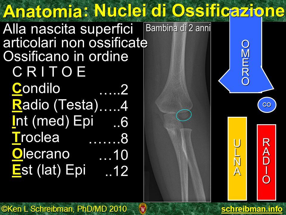 AnatomiaULNA RADIO OMERO Alla nascita superfici articolari non ossificate Ossificano in ordine C R I T O E Condilo Radio (Testa) Int (med) Epi Troclea