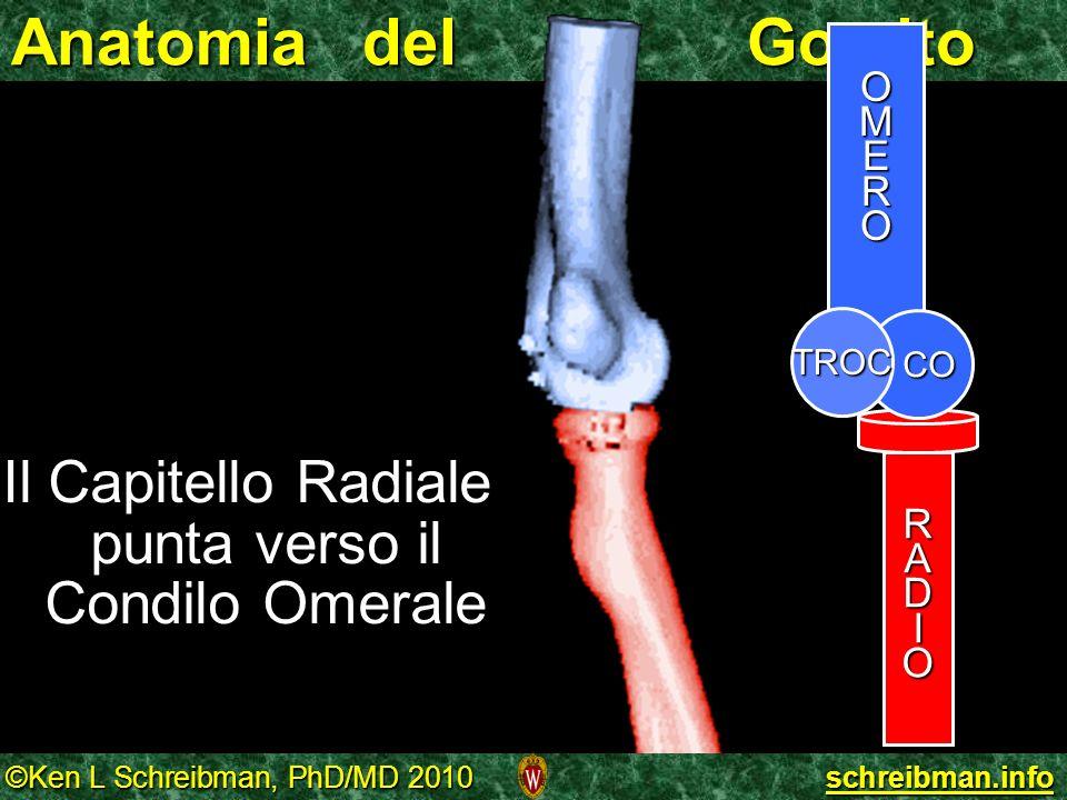 ©Ken L Schreibman, PhD/MD 2010 schreibman.info Anatomia del Gomito OMERO RADIO CO TROC Il Capitello Radiale punta verso il Condilo Omerale Il Capitell