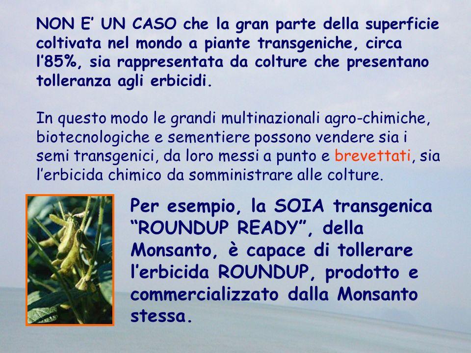 RISCHI RELATIVI A UTILIZZAZIONE COME FONTE DI CIBO Come cittadini-consumatori: -quale è il nostro vantaggio nel consumare cibo contenente geni suicidi.