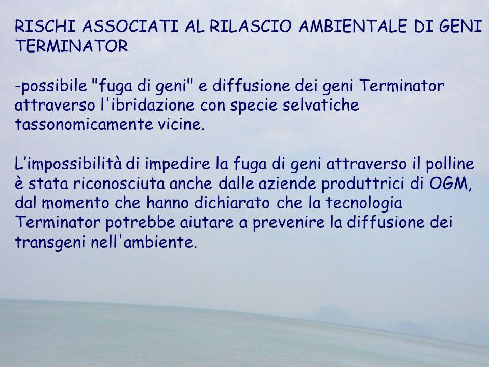 RISCHI ASSOCIATI AL RILASCIO AMBIENTALE DI GENI TERMINATOR -possibile