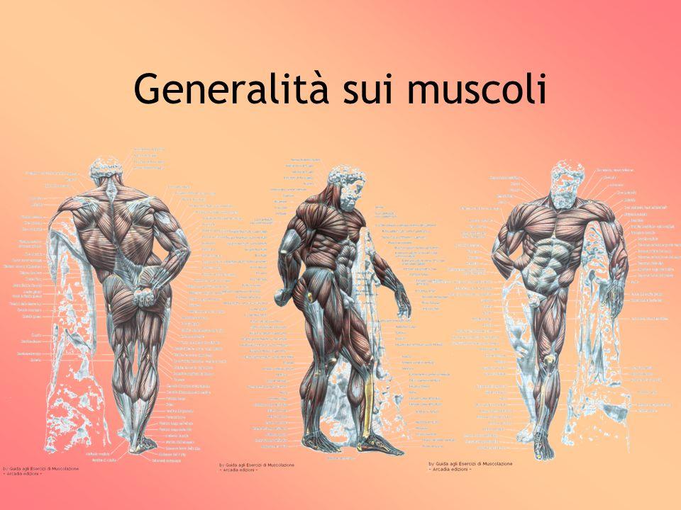 Generalità sui muscoli