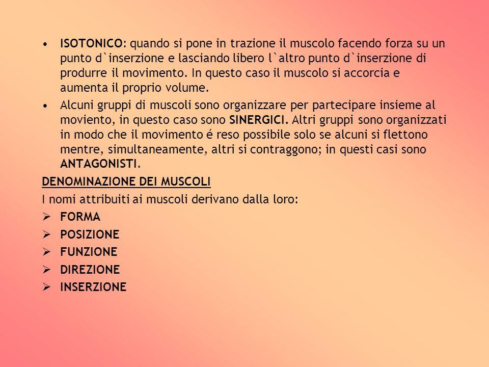 ISOTONICO: quando si pone in trazione il muscolo facendo forza su un punto d`inserzione e lasciando libero l`altro punto d`inserzione di produrre il m