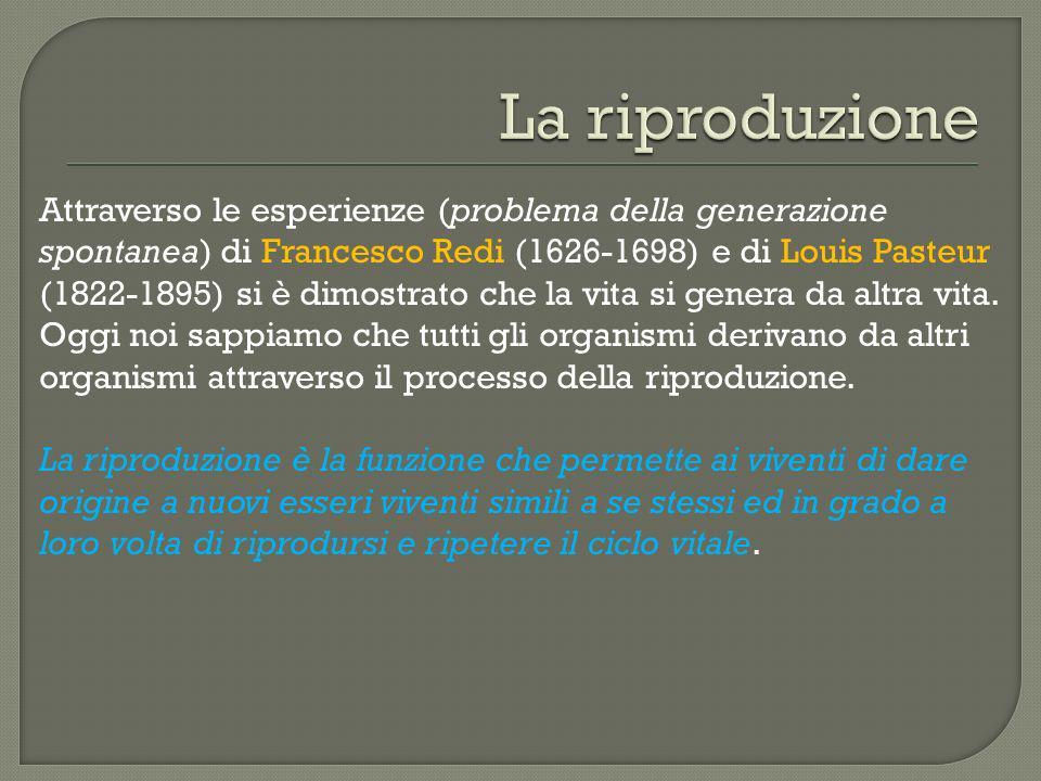 Attraverso le esperienze (problema della generazione spontanea) di Francesco Redi (1626-1698) e di Louis Pasteur (1822-1895) si è dimostrato che la vi