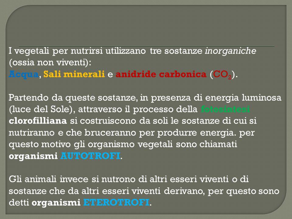 I vegetali per nutrirsi utilizzano tre sostanze inorganiche (ossia non viventi): Acqua, Sali minerali e anidride carbonica (CO 2 ). Partendo da queste