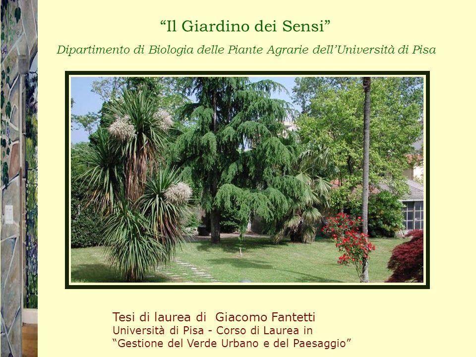 Il Giardino dei Sensi Dipartimento di Biologia delle Piante Agrarie dellUniversità di Pisa Tesi di laurea di Giacomo Fantetti Università di Pisa - Cor