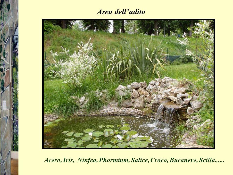 Area delludito Acero, Iris, Ninfea, Phormium, Salice, Croco, Bucaneve, Scilla......