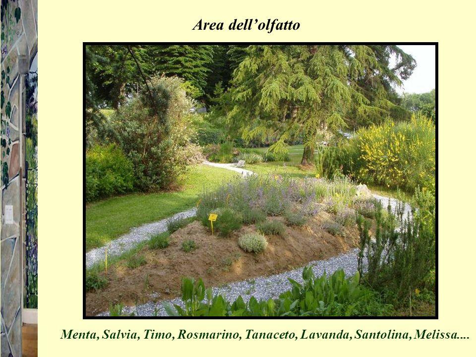 Area dellolfatto Menta, Salvia, Timo, Rosmarino, Tanaceto, Lavanda, Santolina, Melissa....