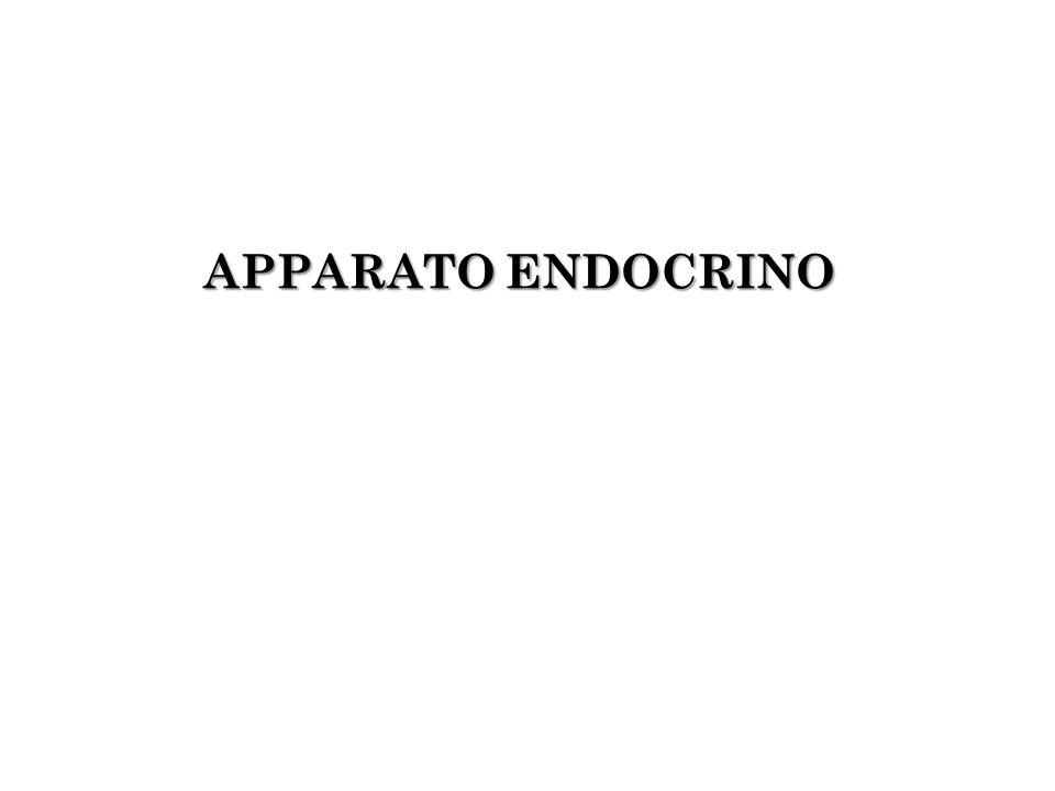 APPARATO ENDOCRINO