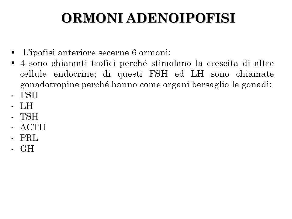 ORMONI ADENOIPOFISI Lipofisi anteriore secerne 6 ormoni: 4 sono chiamati trofici perché stimolano la crescita di altre cellule endocrine; di questi FS