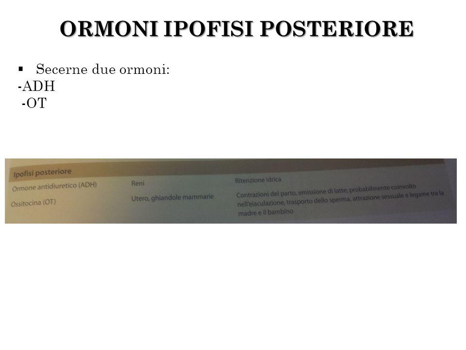 ORMONI IPOFISI POSTERIORE Secerne due ormoni: -ADH -OT