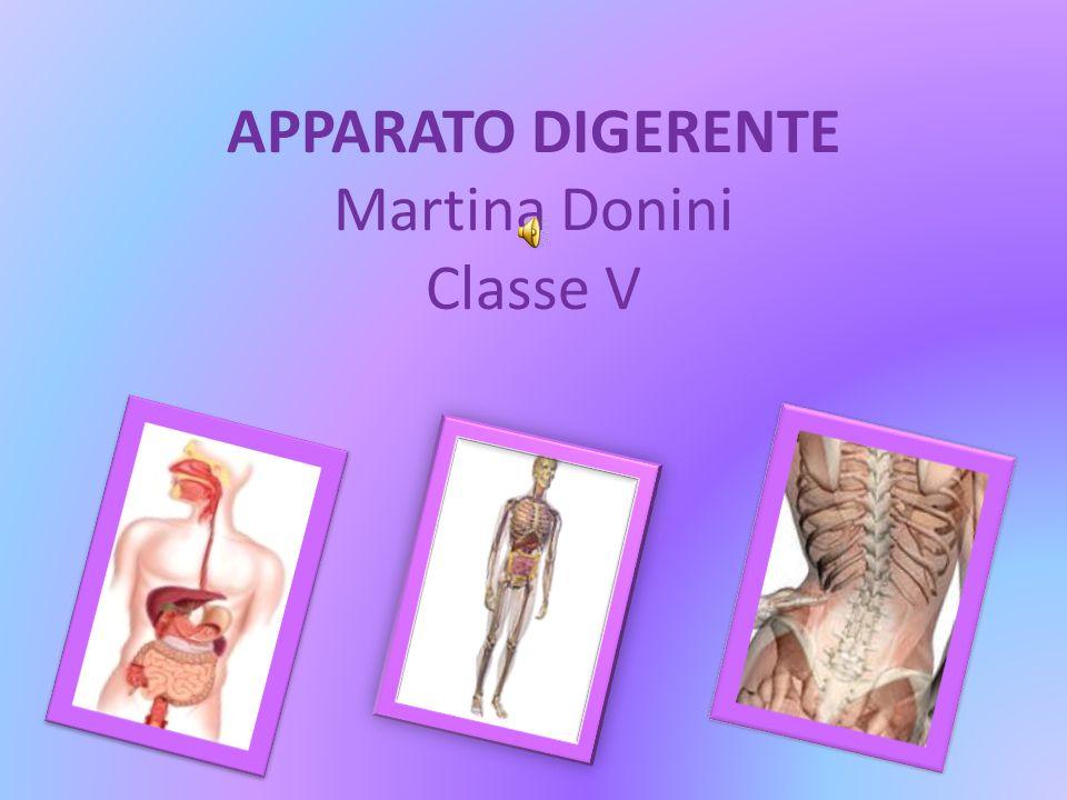 APPARATO DIGERENTE Martina Donini Classe V