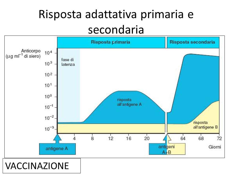 Risposta adattativa primaria e secondaria VACCINAZIONE